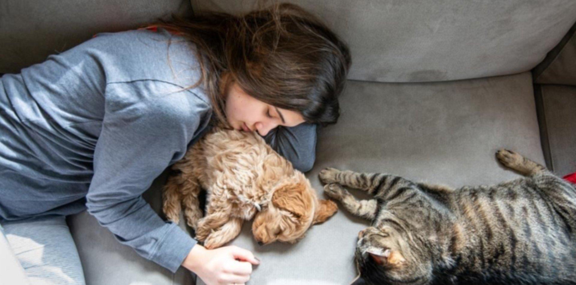 Aseguran que los animales pueden contraer COVID pero no lo transmiten a los humanos