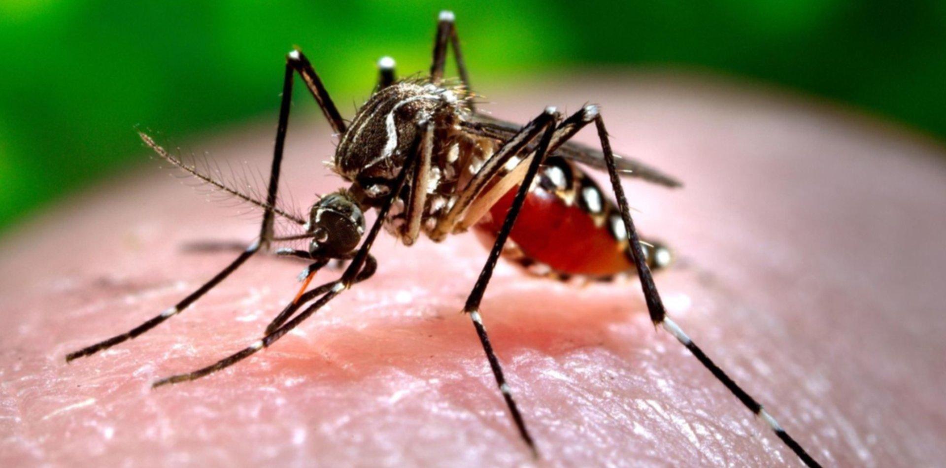 Piden aprovechar la cuarentena para limpiar criaderos y mantener a raya al dengue