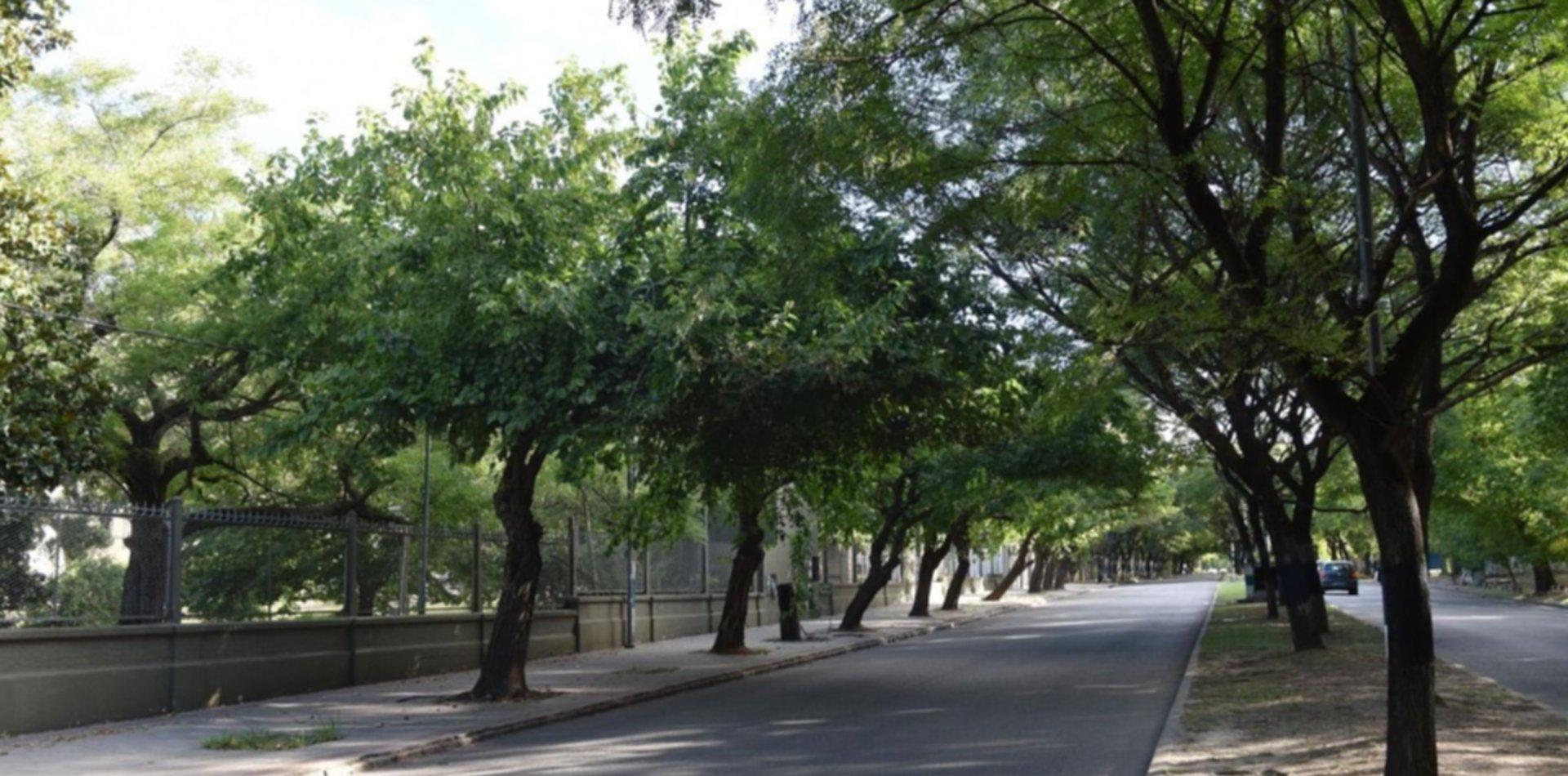 Ambicioso plan del Municipio y la UNLP para mejorar el arbolado en la zona universitaria