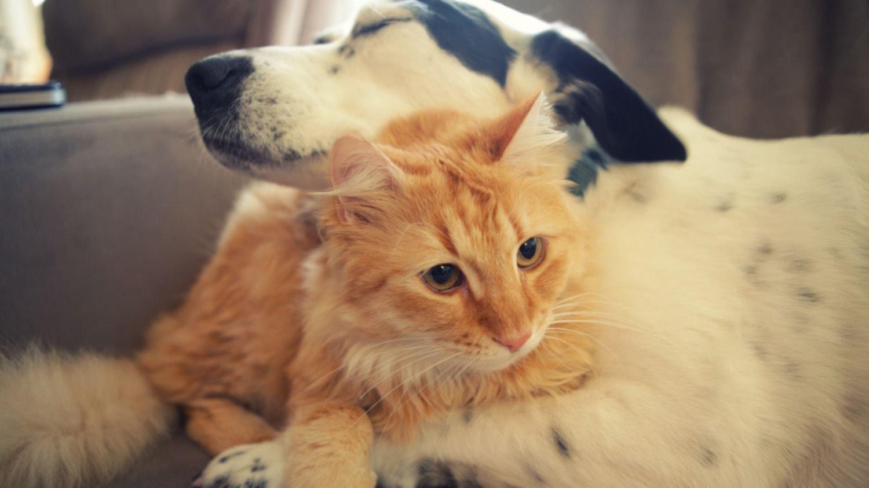 Basta de maltrato animal: La Plata ya tiene un fiscal para protegerlos