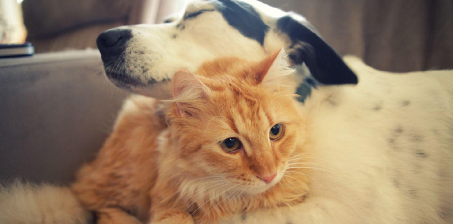Basta de maltrato animal: La Plata ya tiene al fiscal que va a proteger a todas las mascotas