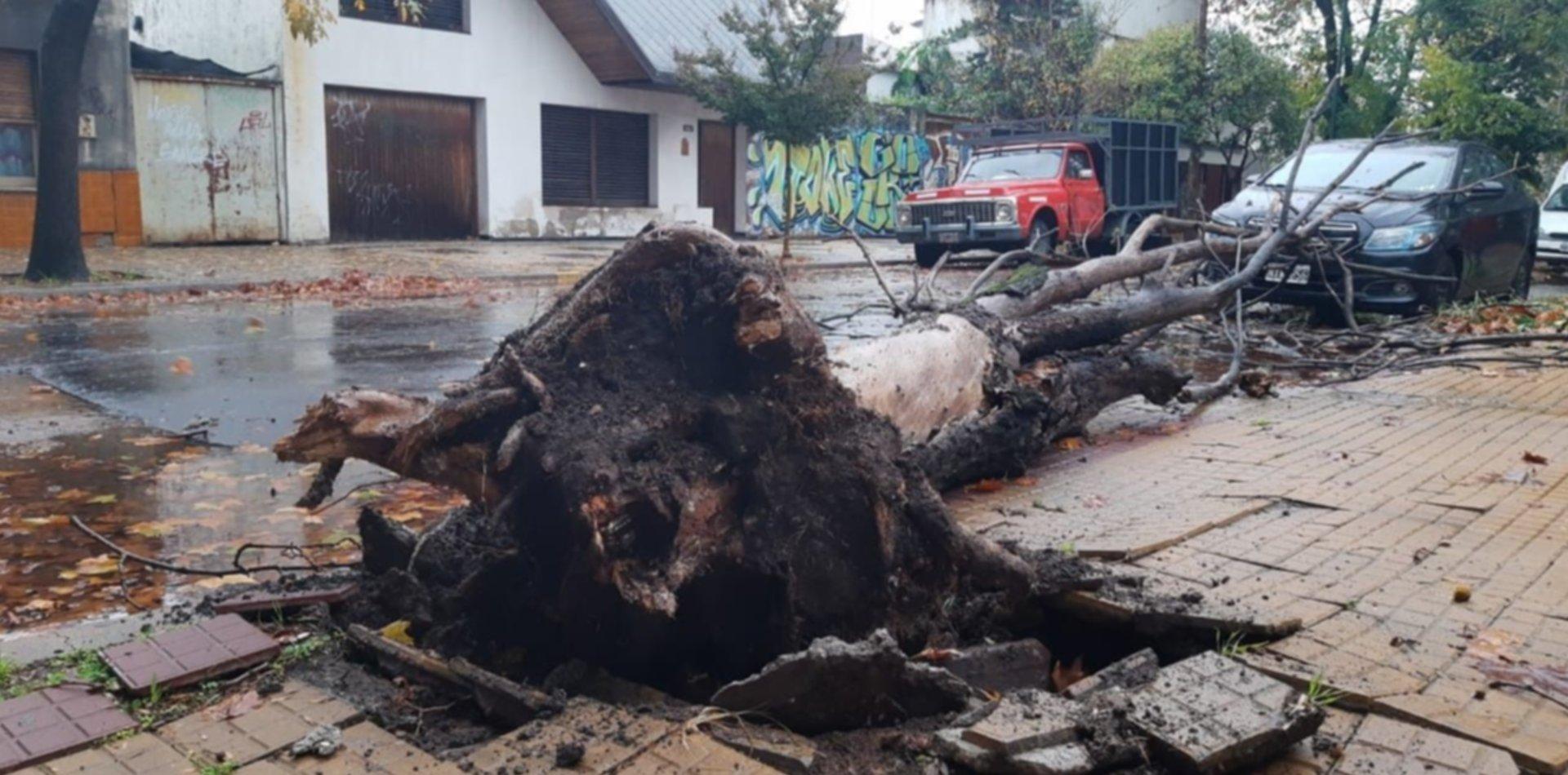 Tormenta, viento, árboles caídos y cortes de luz: sigue el alerta y así están las calles de La Plata
