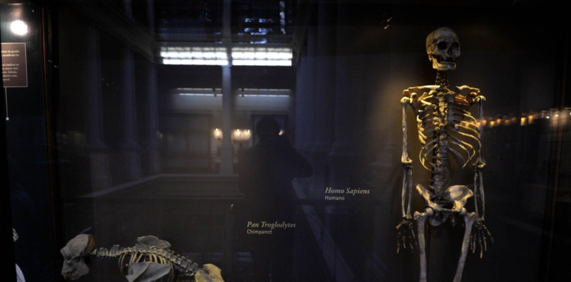 Magia, sorpresas y micros gratuitos: cómo será la noche de los Museos a la luz de la Luna