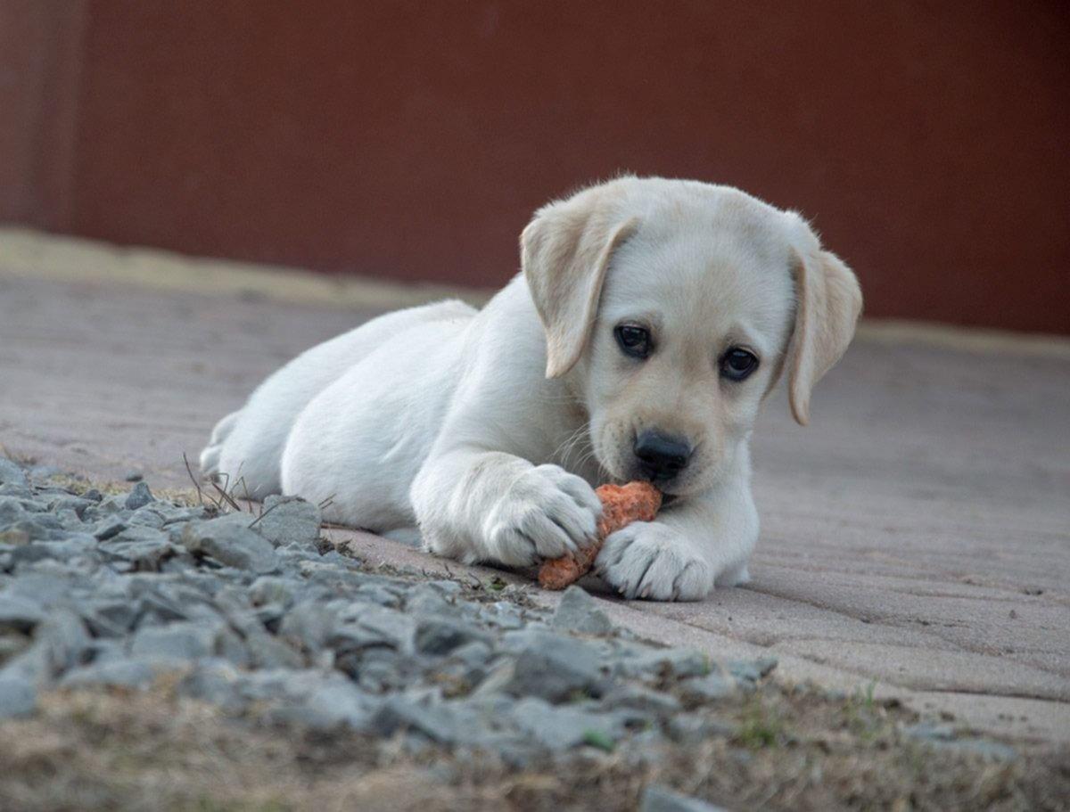 Denuncian que hay un asesino de animales suelto en La Plata que le disparó a una perra
