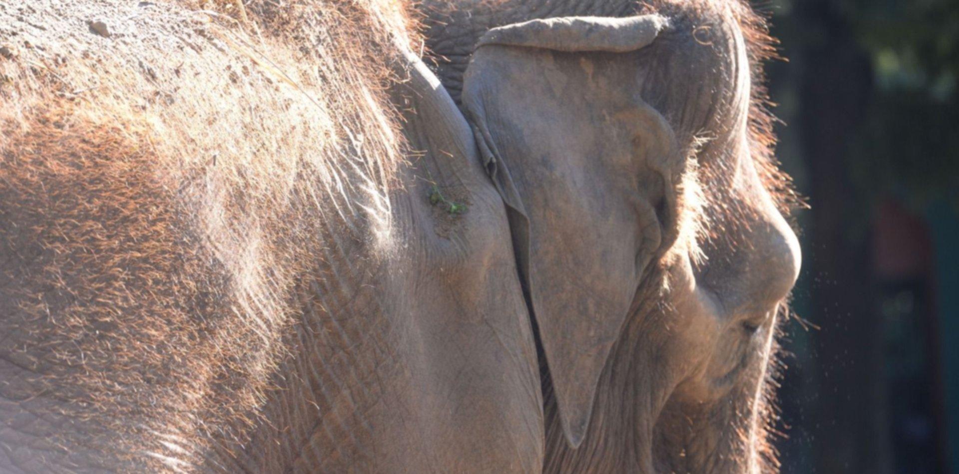 El recuerdo de la elefanta Pelusa en fotos, a dos años de su muerte