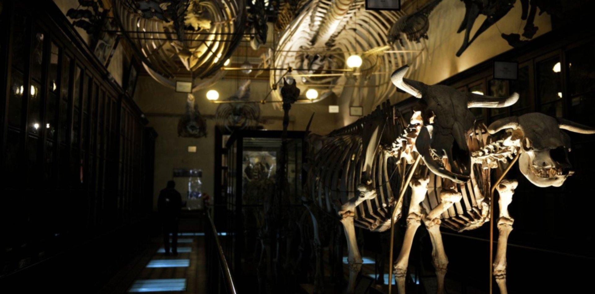Con un fósil, científicos recrean la evolución de los dinosaurios hasta los cocodrilos
