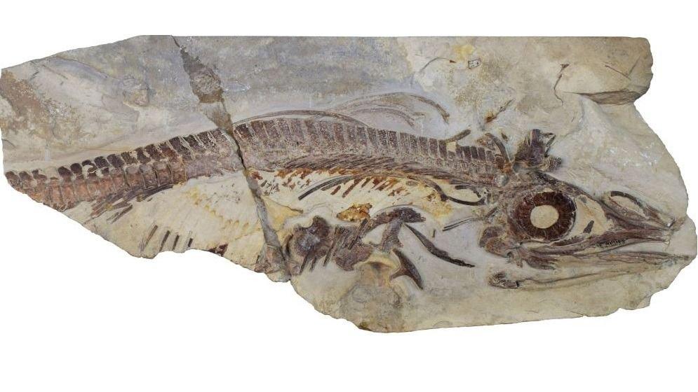 Investigadores de La Plata encuentran dos reptiles que vivieron hace 90 millones de años