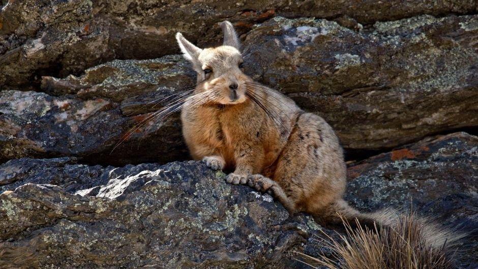 Denuncian la muerte de animales silvestres cerca del ECAS y temen por cazadores furtivos