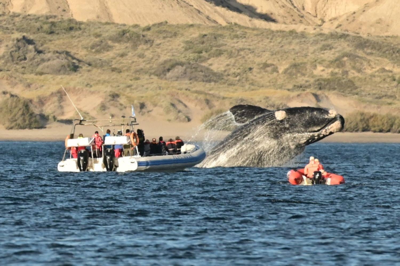 Llegaron las ballenas a Puerto Madryn y esperan una gran temporada de invierno