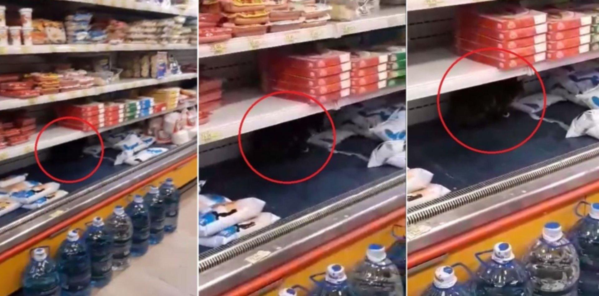 VIDEO: Revuelo en La Plata por un gato tomando leche en la heladera de un súper chino
