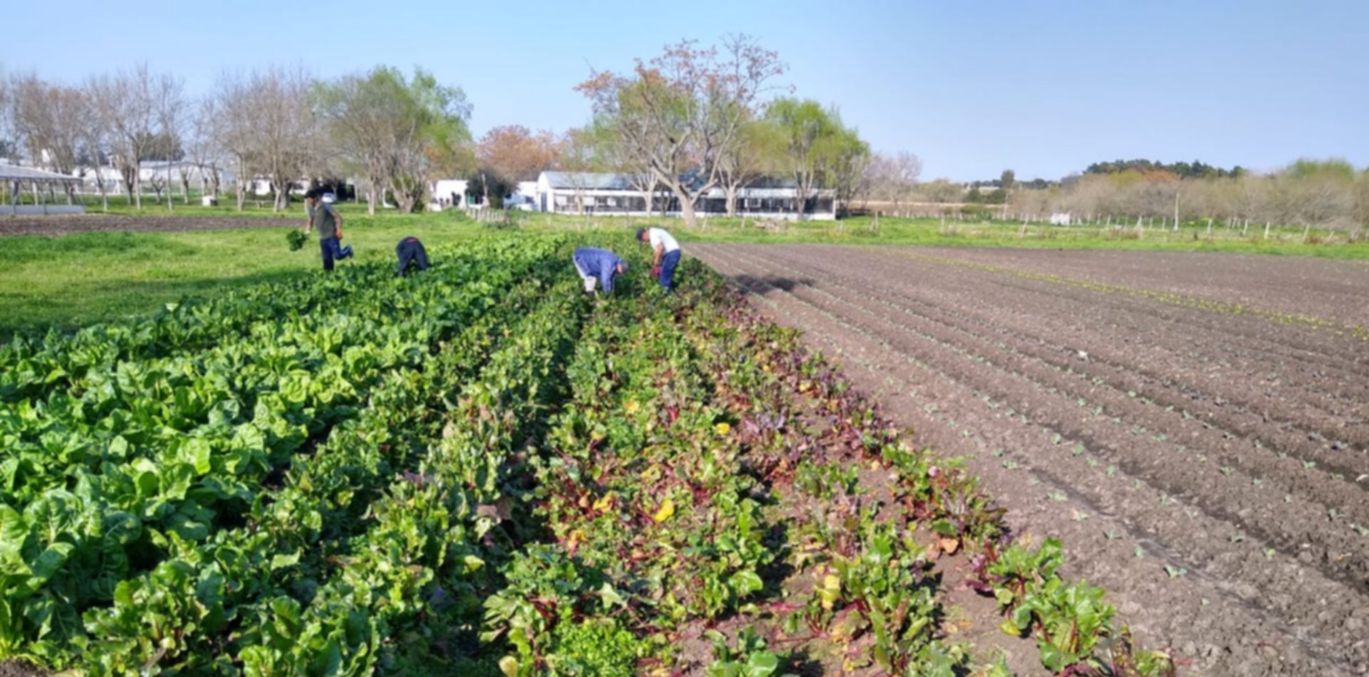 En la huerta de una cárcel de La Plata cosecharon 130 kilos de verduras para un hospital