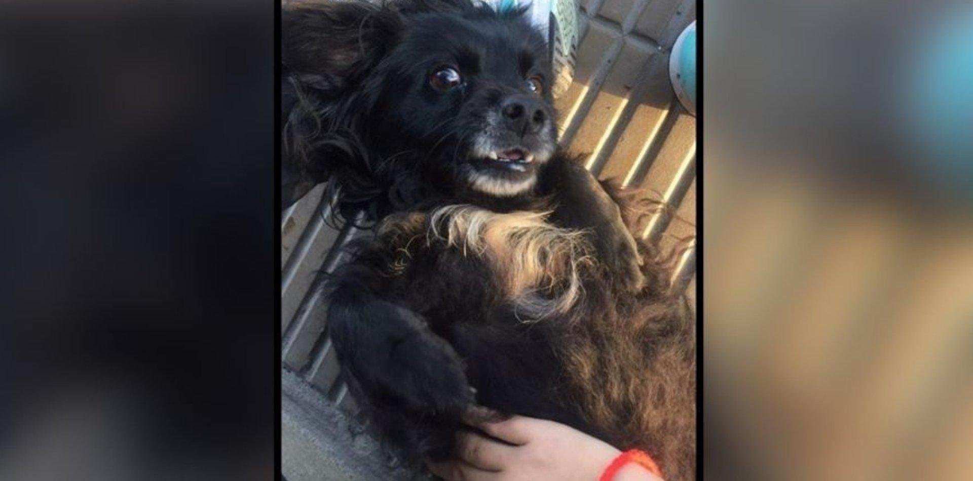 Su perro se perdió hace 11 días y ofrece 400 dólares de recompensa para recuperarlo