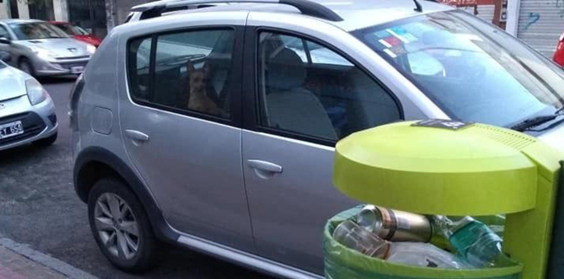 Dejaron a un perrito encerrado en un auto, los escrachó en las redes y se viralizó