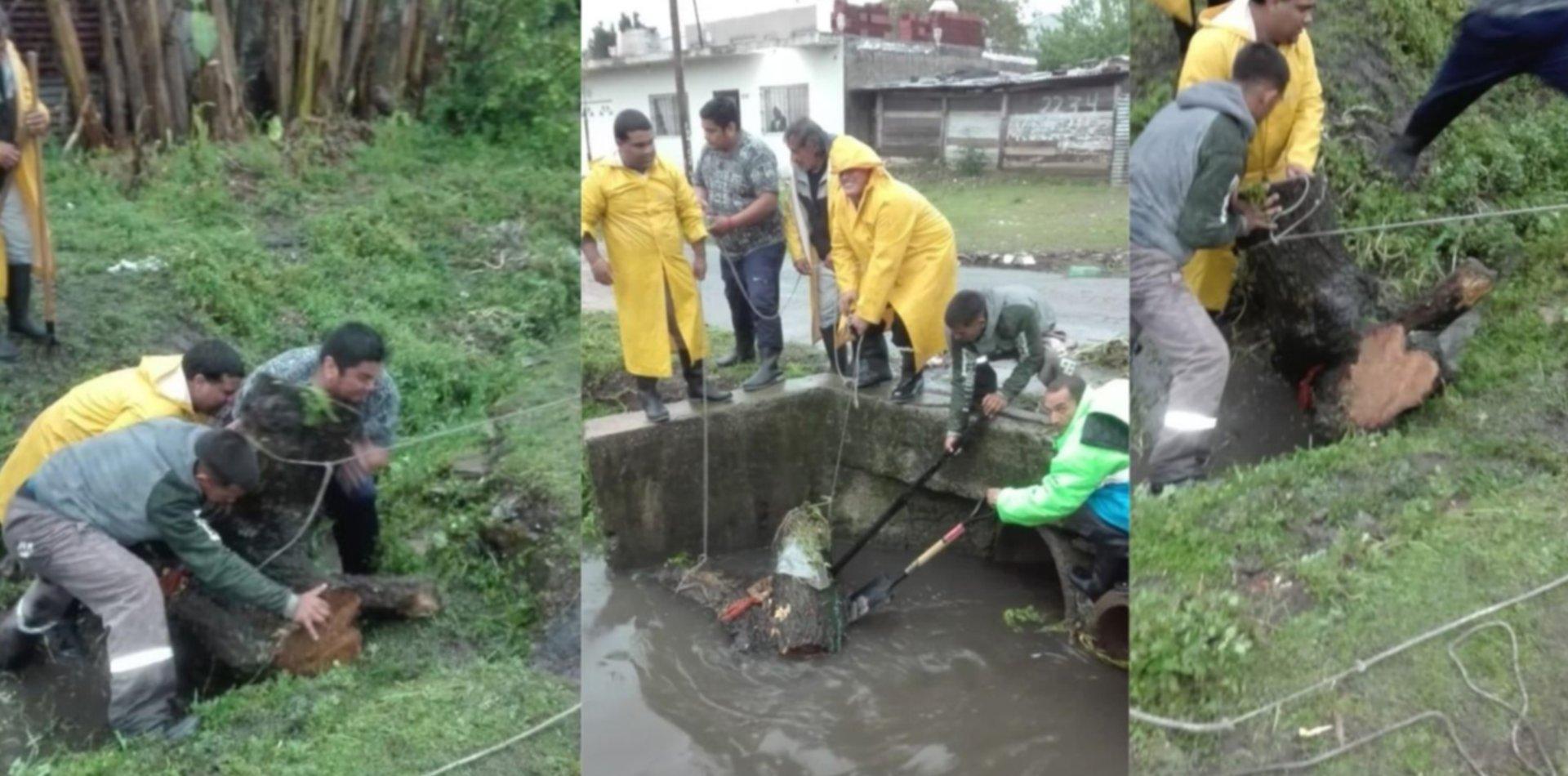 VIDEO: Boicotearon con dos troncos gigantes los desagües en Altos de San Lorenzo