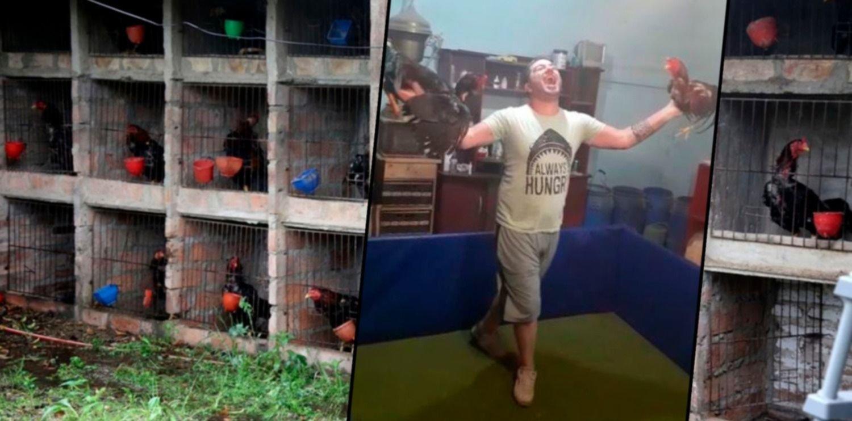 Con un polémico video, reapareció el acusado de organizar riñas de gallos en La Plata