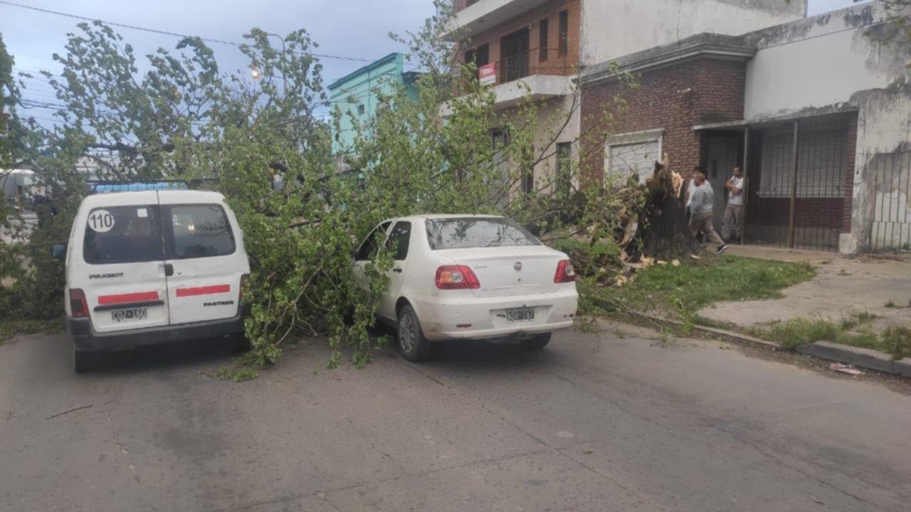 Árboles caídos, autos rotos y caos de tránsito por las ráfagas de viento en La Plata