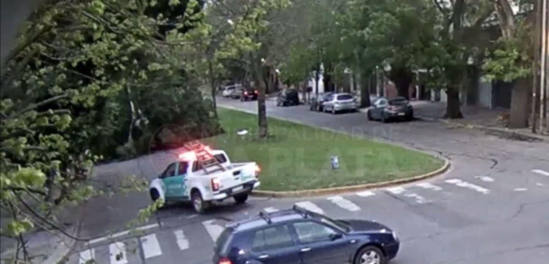 Milagro en La Plata: así cayó una árbol a metros de un auto en marcha