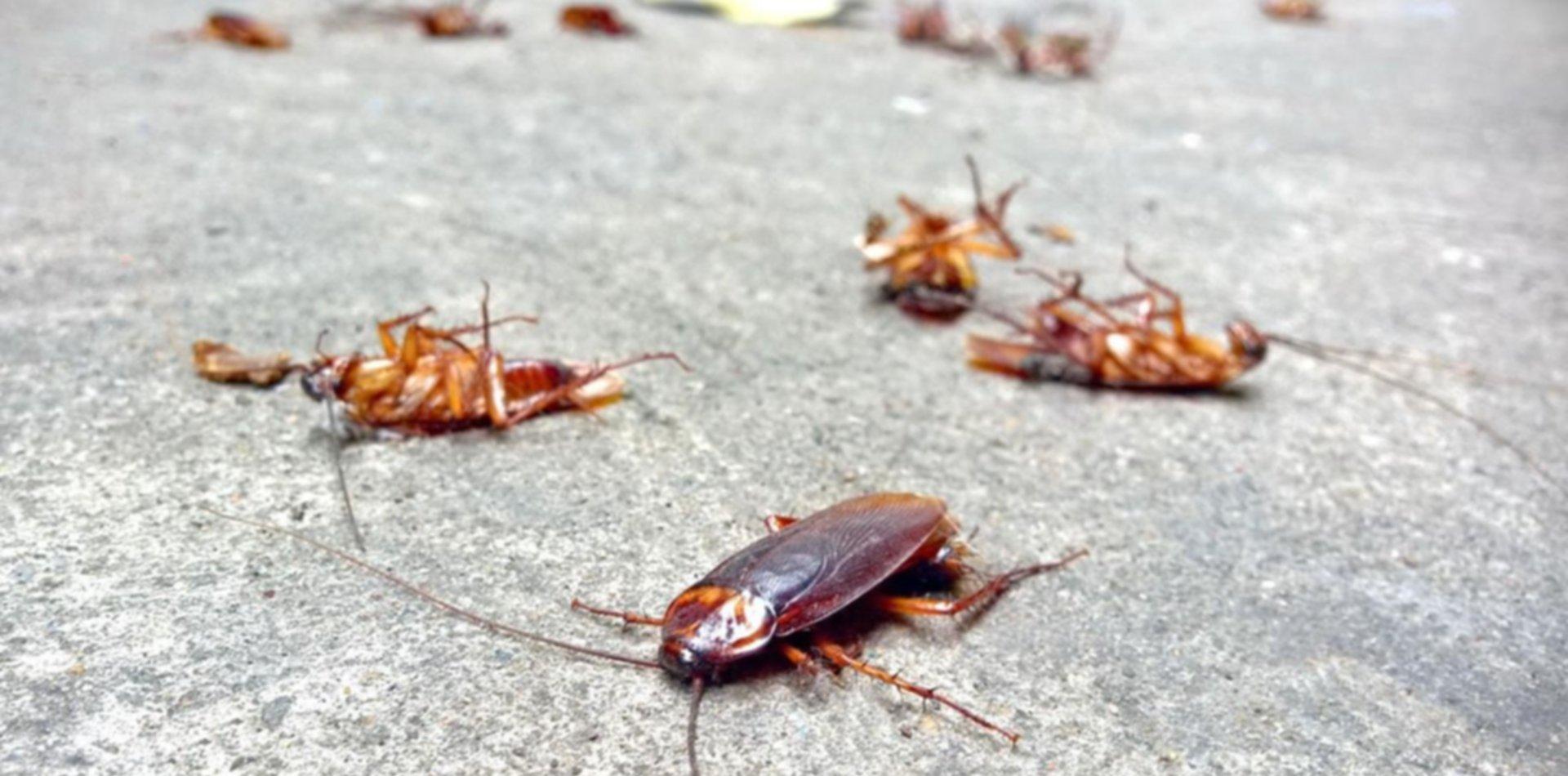 Los consejos caseros de la UNLP para combatir las cucarachas en verano