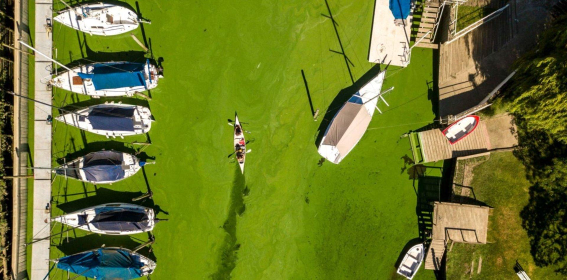 Hallan peces muertos en las costas de Ensenada y creen que fue por las cianobacterias